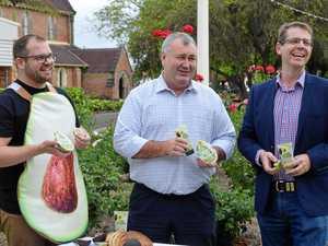 Avocados a smash hit for Bundaberg
