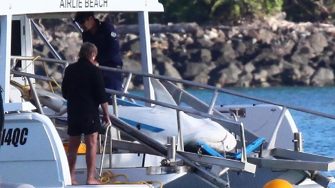 A shark is removed after being killed in Cid Harbour in the Whitsundays. Picture: Mick Moonen