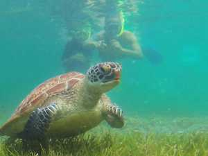 New fears for plastic ingestion by turtles