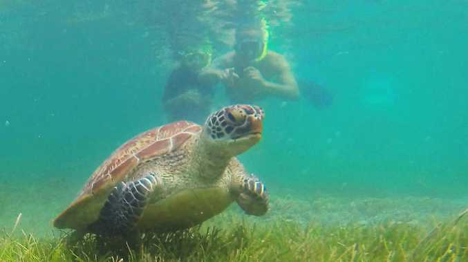 AGreen turtle with snorkellers off Green Island, part of the Great Barrier Reef Marine Park near Cairns in Far North Queensland. Picture: Brendan Radke.
