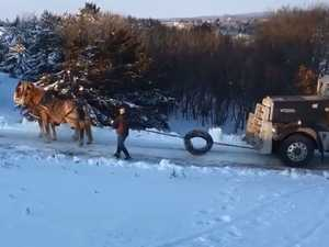 VIDEO: Horses pull semi-trailer up ice-covered hill
