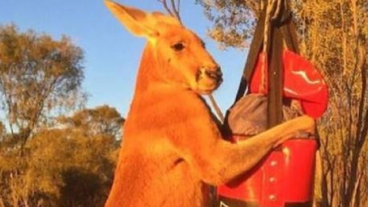 A beloved Aussie kangaroo whose ripped physique and don't-mess-with-me antics have made global headlines has passed away.