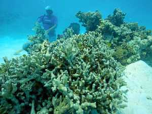 Corals thriving at depths of Reef