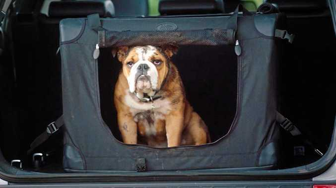Land Rover has launched a range of premium Pet Packs to help their four-legged friends travel in the lap of luxury.