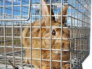 Councils say no to rabbits