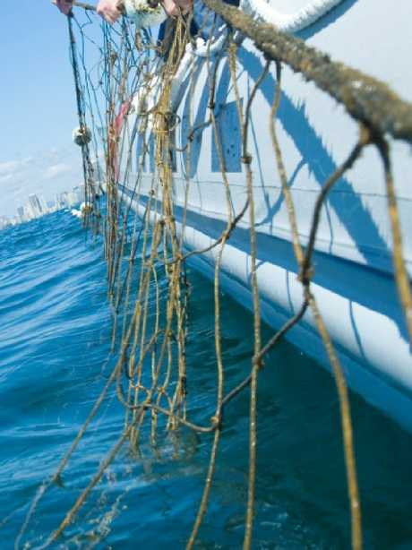 Shark nets and drumlines will be stripped from Queensland beaches starting from today