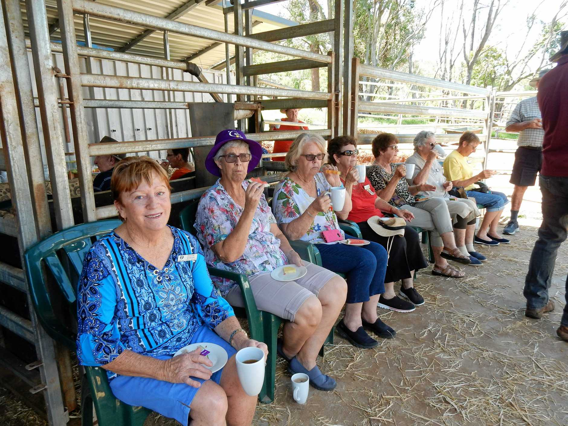 Gympie National Seniors members enjoyed visiting Camelot Dairies at Scrubby Creek. After enjoying morning tea prepared by Cathy, they listened to an interesting talk by Melanie about the running of the camel dairy.
