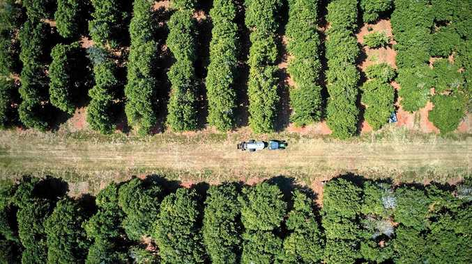 Councillors debate the future of agriculture on Coffs Coast