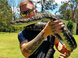 A+ Reptile Relocations : New snake catcher in Toowoomba