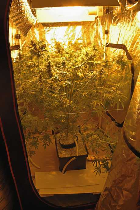 Eight large cannabis plants each with an elaborate watering system, lights and timers were found at a Terranora property.
