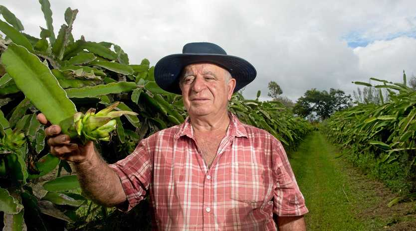 CROP RUINED: Charlie Zara has felt the impact of the recent weather and has had the majority of crops on his farm destroyed.