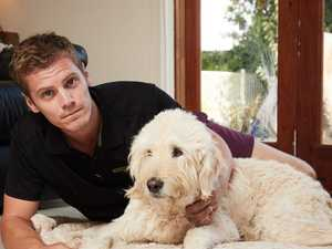 'Extremely strong' death link to dog food
