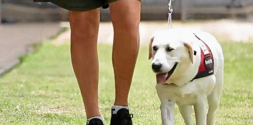 One of the latest canine graduates as part of the Smart Pups program at the Maryborough Correctional Centre.