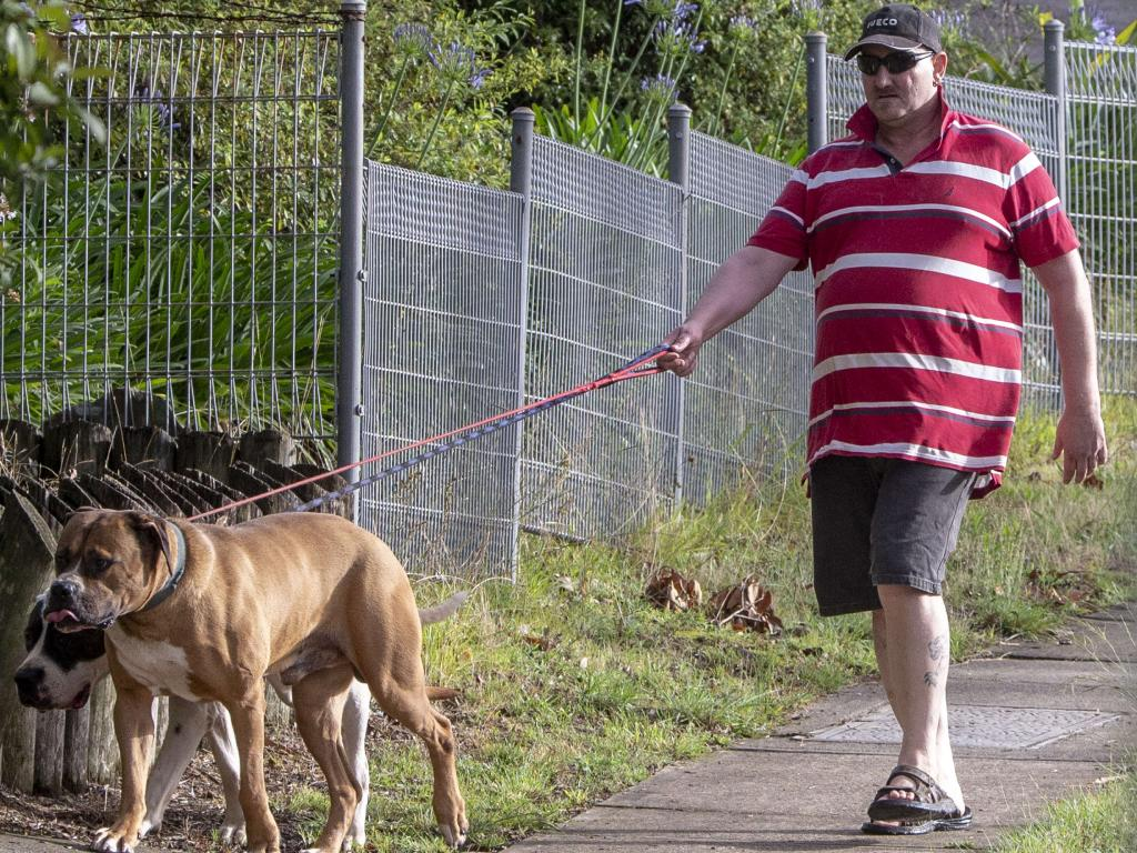 Raymond Holschier walking his dogs in a Sydney suburb on Sunday.