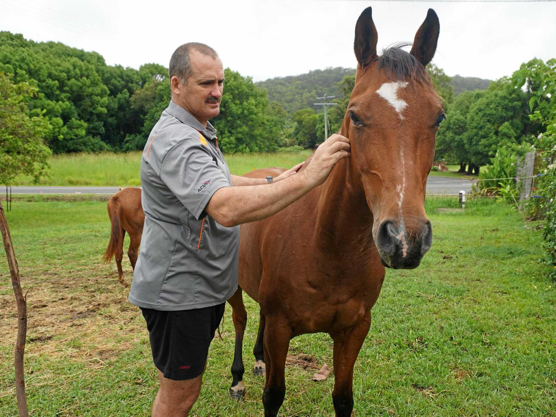 John Kirkham strokes horse, C Me at a Ninderry property.
