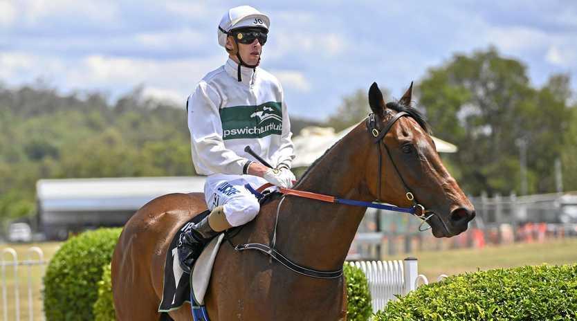 Jockey Jim Orman guides Nothingforthepress back to the Ipswich enclosure after his latest win at Bundamba.