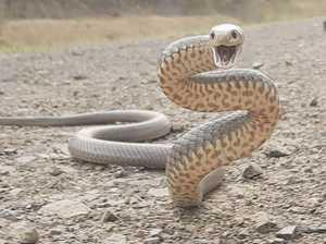 Woman taken to Bundy hospital after suspected snake bite
