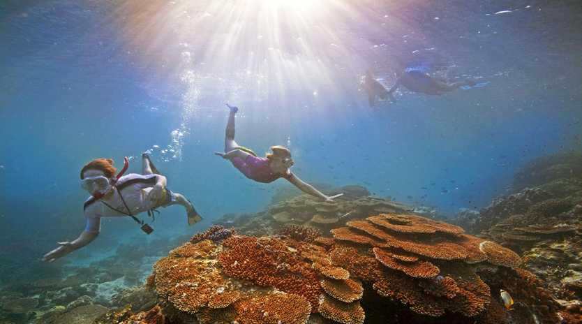 An research team has received funding from the Great Barrier Reef Foundation to develop bacteria for corals.