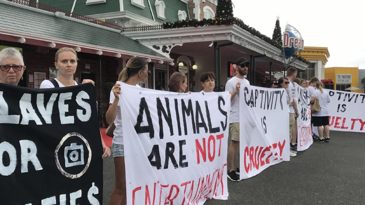 Animals rights protestors outside Dreamworld on Sunday. Picture: Campbell Gellie