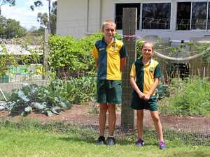 Green is the new gold for Bell State School