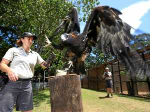 New free flight bird show reaches for the sky