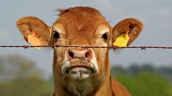 Meatworks blames 'worldwide crash' for $7 million loss