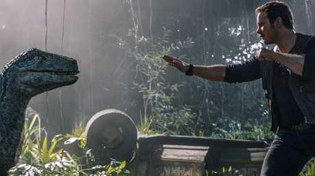 Owen (Chris Pratt) is reunited with velociraptor Blue in a scene from Jurassic World: Fallen Kingdom.