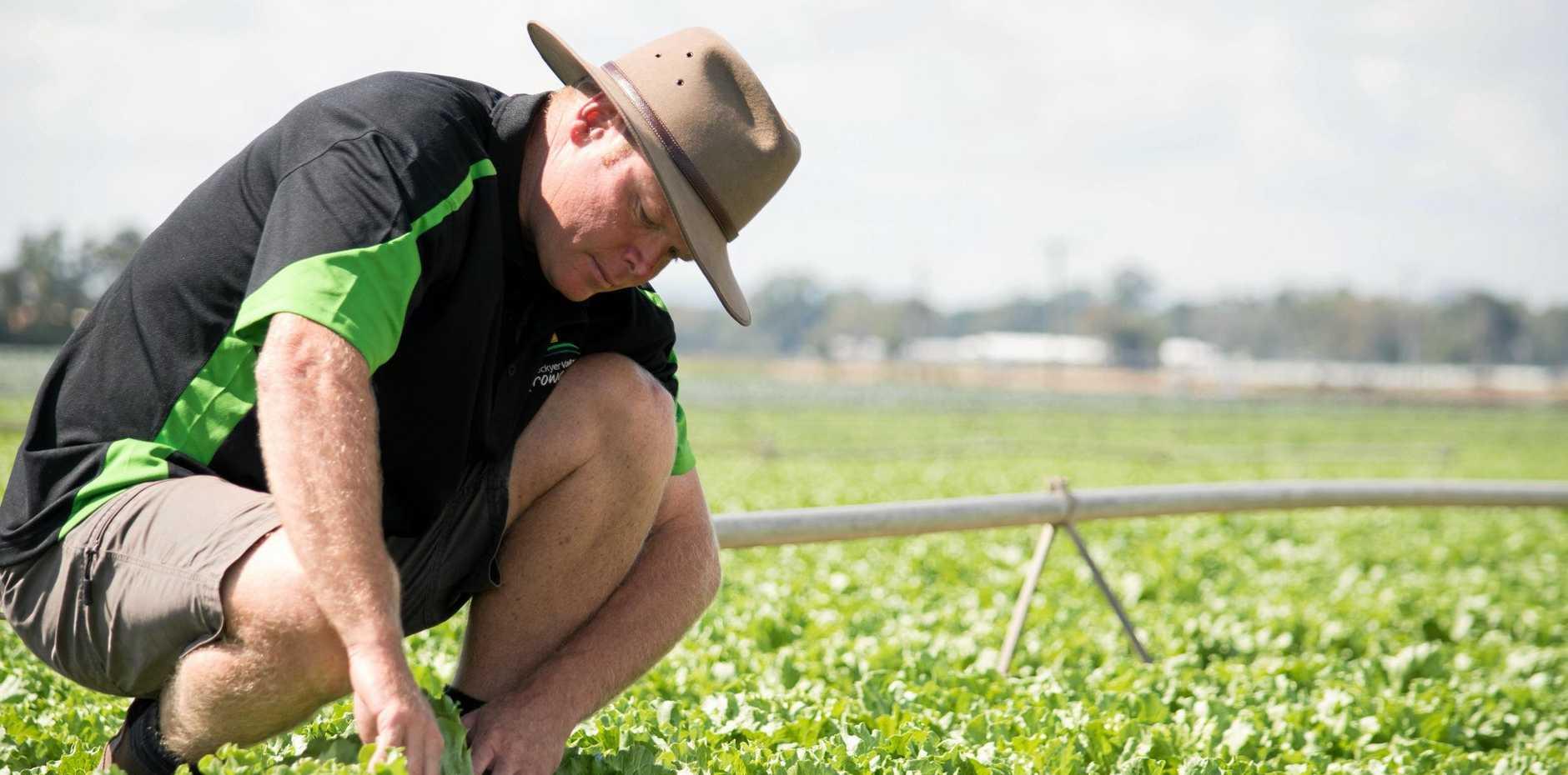 Lockyer Valley Growers Association president Michael Sippel.