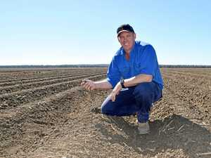 Emerald cotton and grain growers are pleading for more rain
