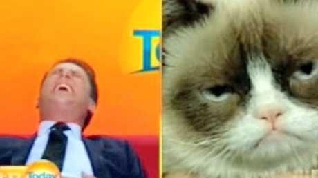 Karl Stefanovic loses it on TV during his interview with Grumpy Cat. Picture: Nine