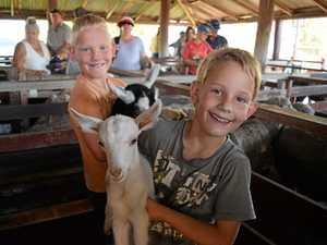 GALLERY: Kids take over Warwick Saleyards