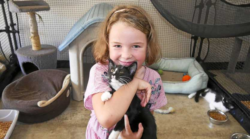 CHRISTMAS SPIRIT: Sophie Suvill, 6, donated her pocket money to the local animal shelter for cat toys yesterday.