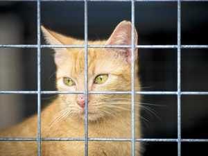 40 cats abandoned, RSPCA sent to investigate