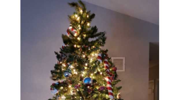 Can you find the cat in this Christmas tree?