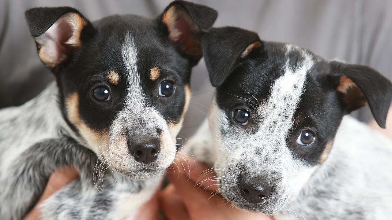 They're cute and cuddly but animal welfare group Four Paws has urged people to avoid buying a Christmas puppy online.