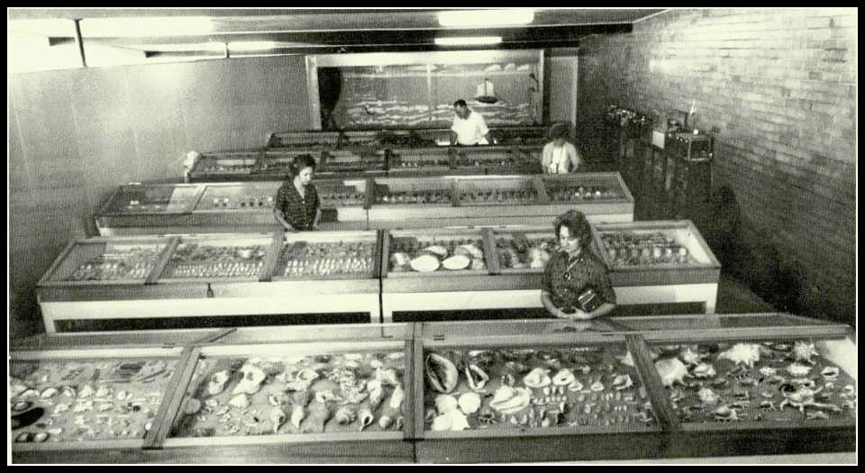 Dorothy Brown had a shell museum in the 60s and 70s at 34 James St.