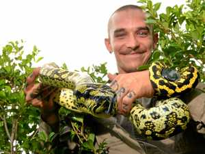 Why Coast's snake season is about to go 'berserk'