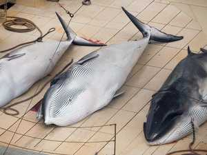 Japan to start whaling again
