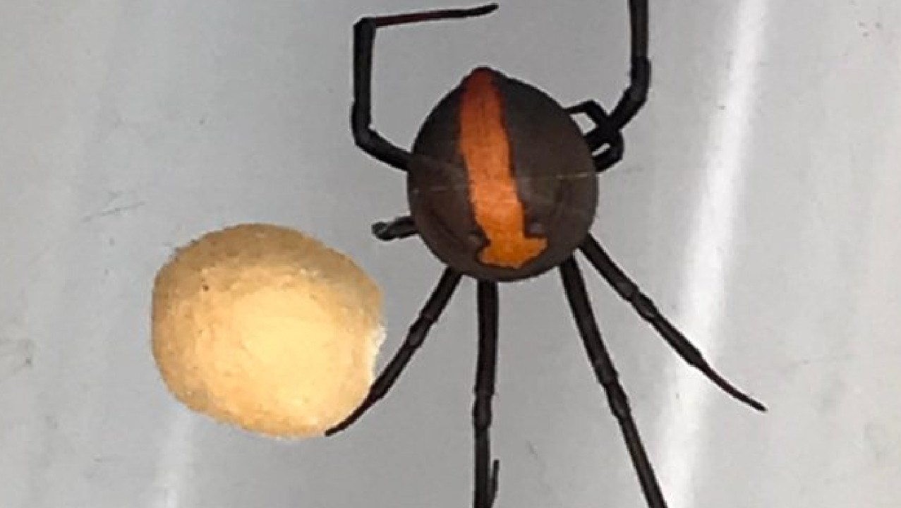 An Australian family found this unwanted visitor in their home.