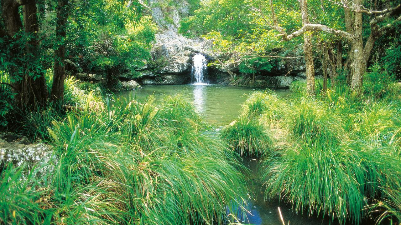 Queenslands best swimming spots Kondalilla Falls credit Tourism Queensland