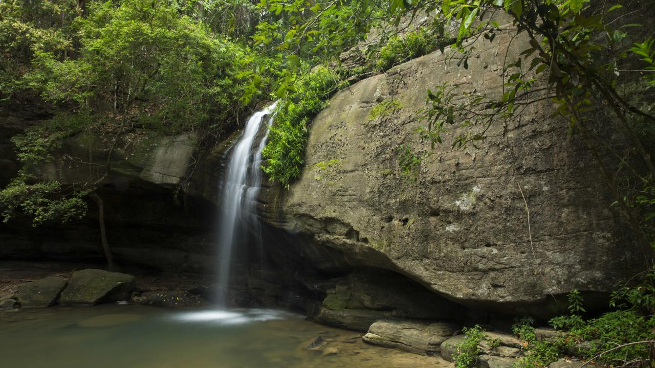 Serenity Falls in the Buderim Forest Park. Photo Lachie Millard