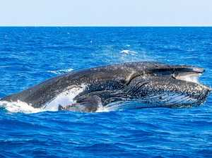 Local whale operators outraged at Japan's whaling decision