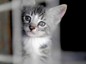 Cats, dogs and wallaby surrendered to RSPCA