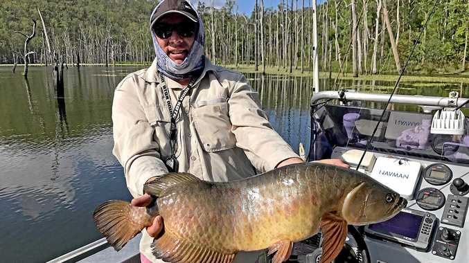 WHOPPER: Craig McCarthy won the $100 Davo's/ChaseBaits Fish of the week prize with this 76cm saratoga which he caught and released at Borumba Dam.