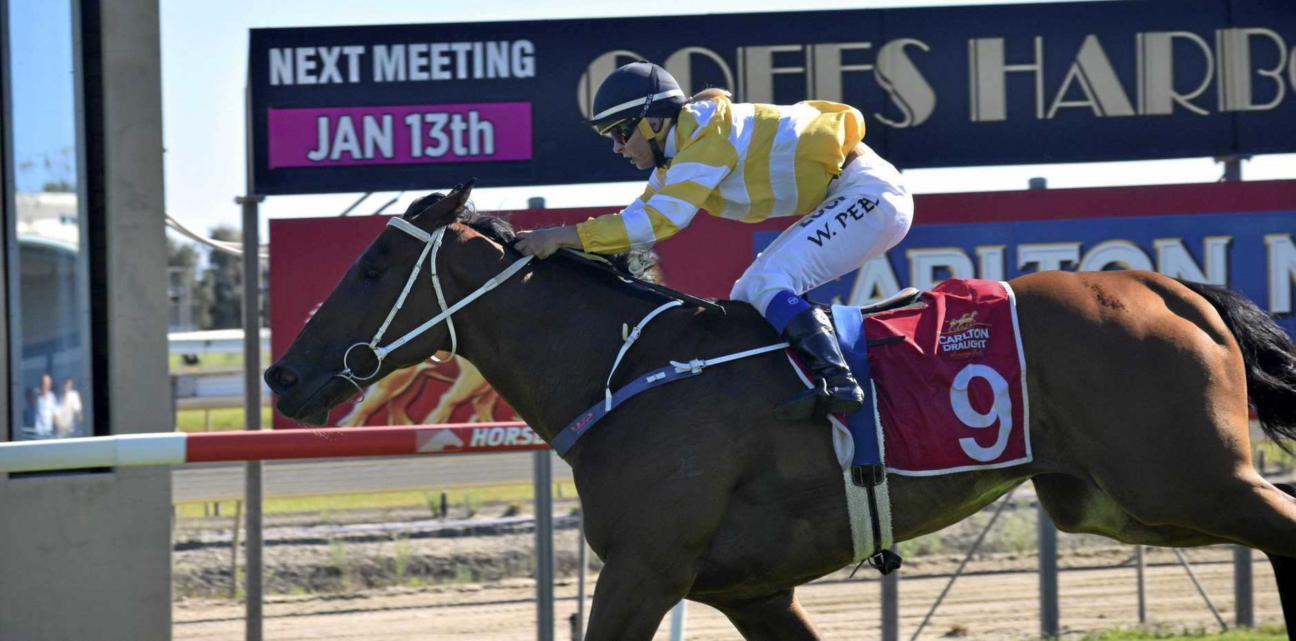 HOME AND HOSED: Wendy Peel piloted Eyebea Danser to victory in the seventh race at Coffs Harbour on Thursday.