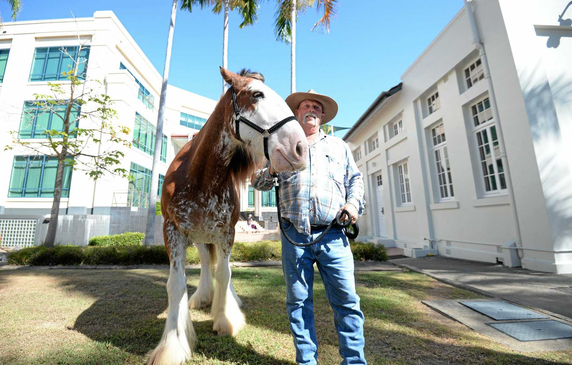Steven May and Kenny the Clydesdales outside Rockhampton Court House.