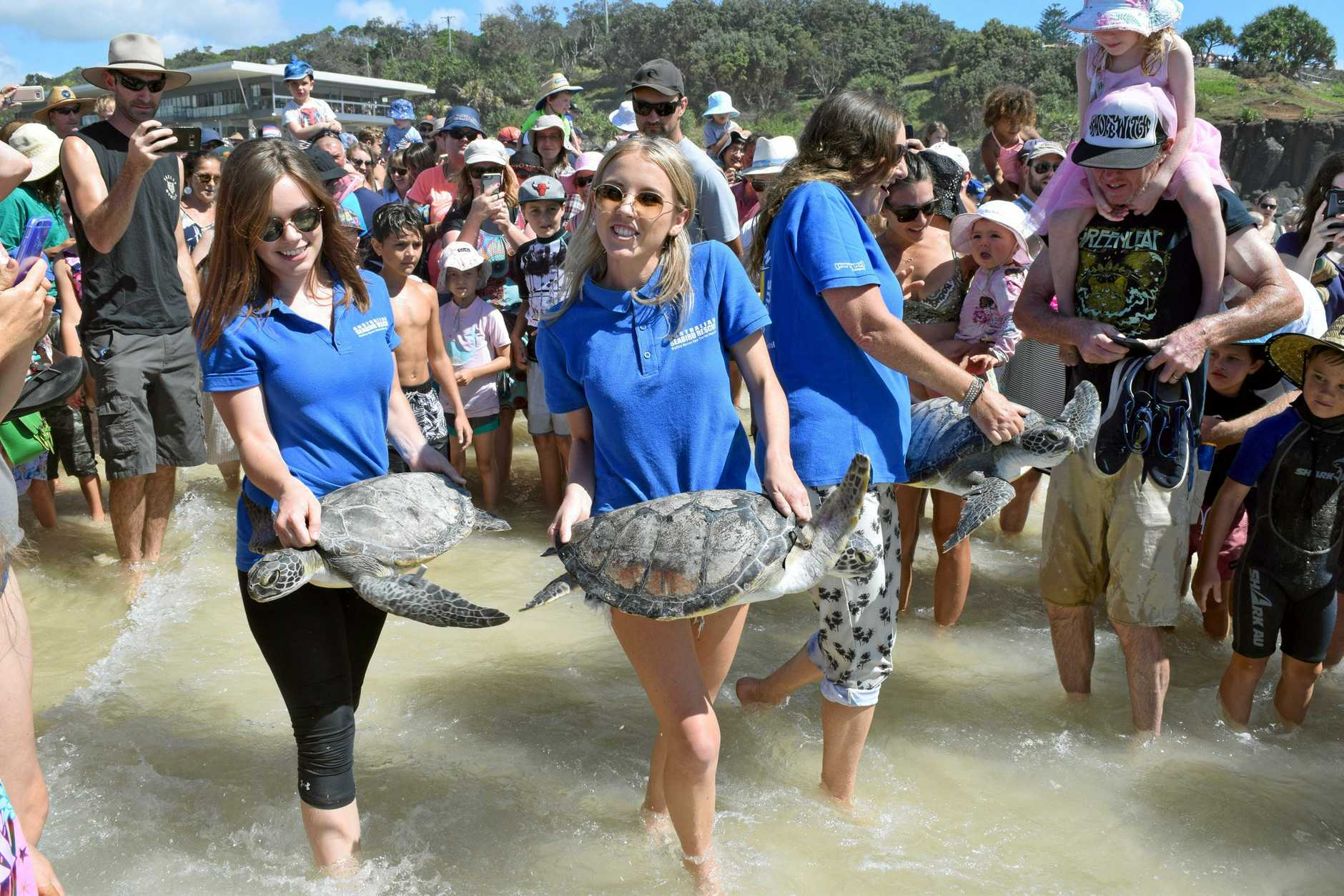 HOME FREE: Australian Seabird Rescue's Paige Nealon, Olivia Pitt and Kathrina Southwell released three green sea turtles at Lighthouse Beach yesterday. .
