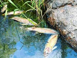 Hundreds of dead fish found at popular watering hole