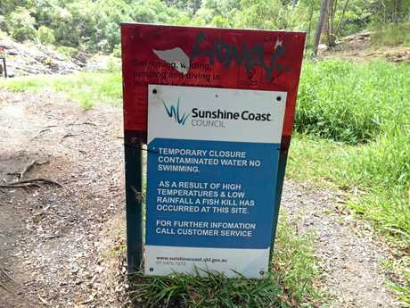 Sunshine Coast Council officers have removed about 250 dead fish from Wappa Falls, which are believed to have died from a lack of oxygen.