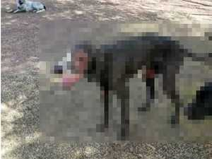 GRAPHIC: Dog put down after being beaten, covered in tar